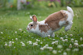 Rabbit jumping on the grass