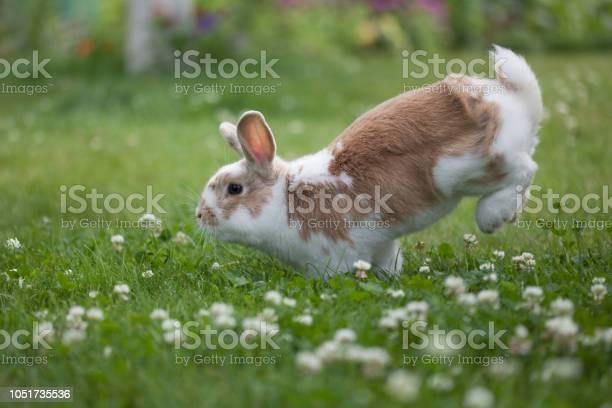 Funny easter rabbit picture id1051735536?b=1&k=6&m=1051735536&s=612x612&h=lztjqxivehayiw gfwdpanenmrrtndnlk1agisgi4zy=