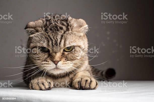 Funny evil gray striped cat picture id505866994?b=1&k=6&m=505866994&s=612x612&h=vnkd8gdbb8aw usxk3jq0pvkvt1wtujix  vzbe5gno=