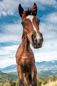 Funny Face Horse Head Portrait. Unique Perspective .