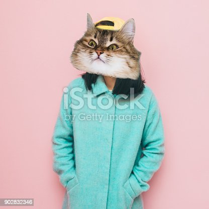 istock Funny face of cat's head 902832346