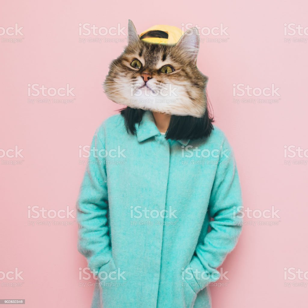 Funny face of cat's head stock photo
