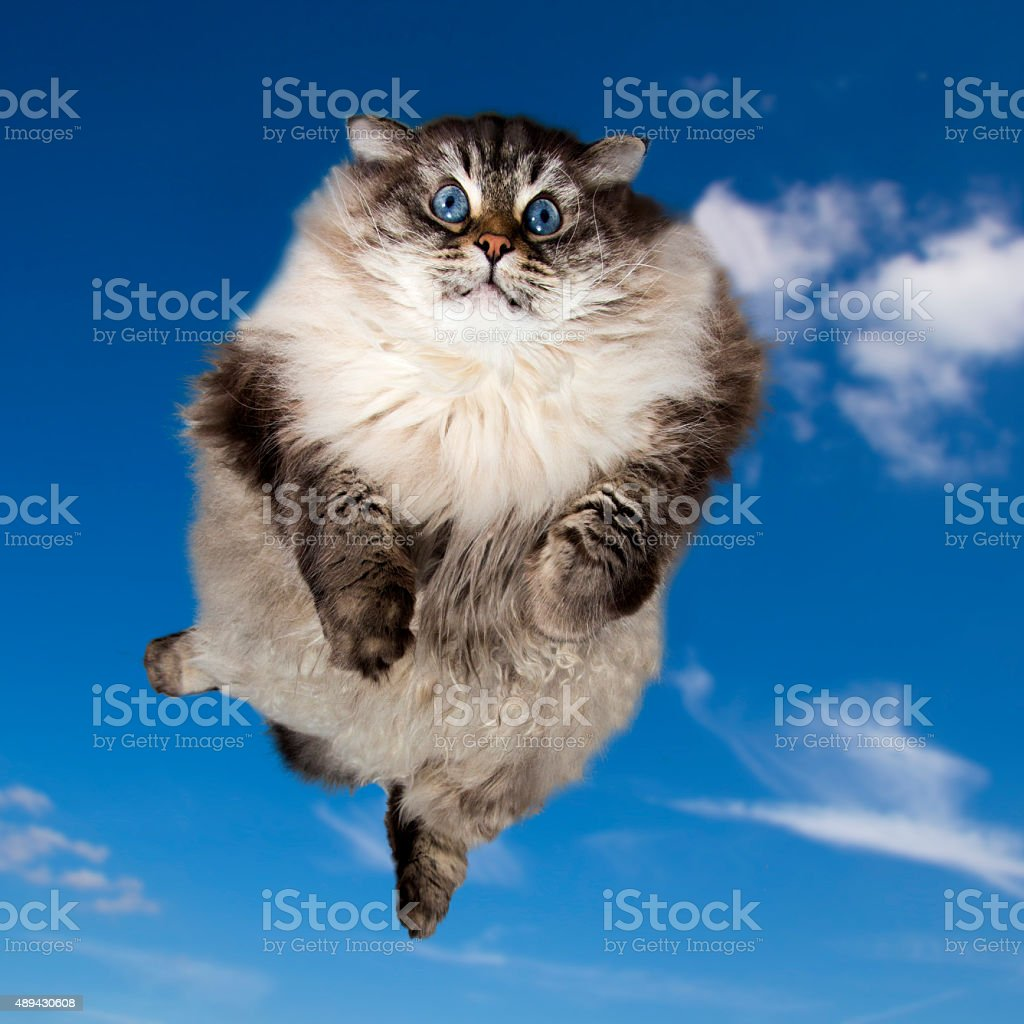 Funny Fat cat flying in the sky stock photo