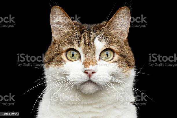 Funny fat cat on isolated black background picture id635905220?b=1&k=6&m=635905220&s=612x612&h=zvehh9ksll7rpyzgt3xgiborswyqgbs9yyt1gvwu0ja=