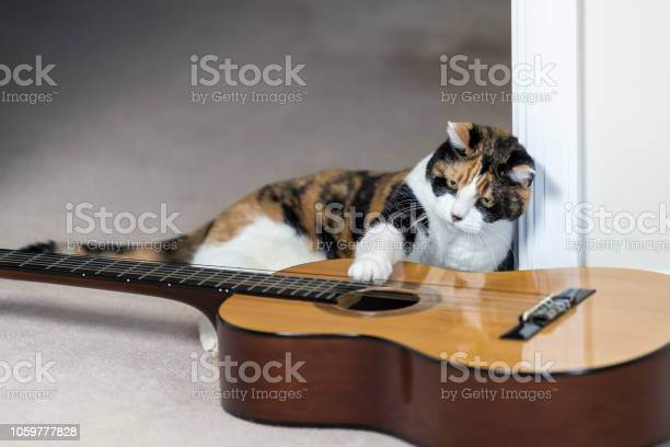 Funny female calico cat sitting lying on carpet floor looking at picture id1059777828?b=1&k=6&m=1059777828&s=612x612&h= 4yum5v2b4qatm bdbtjjtvumdwbvrdoqojt9erbtb8=