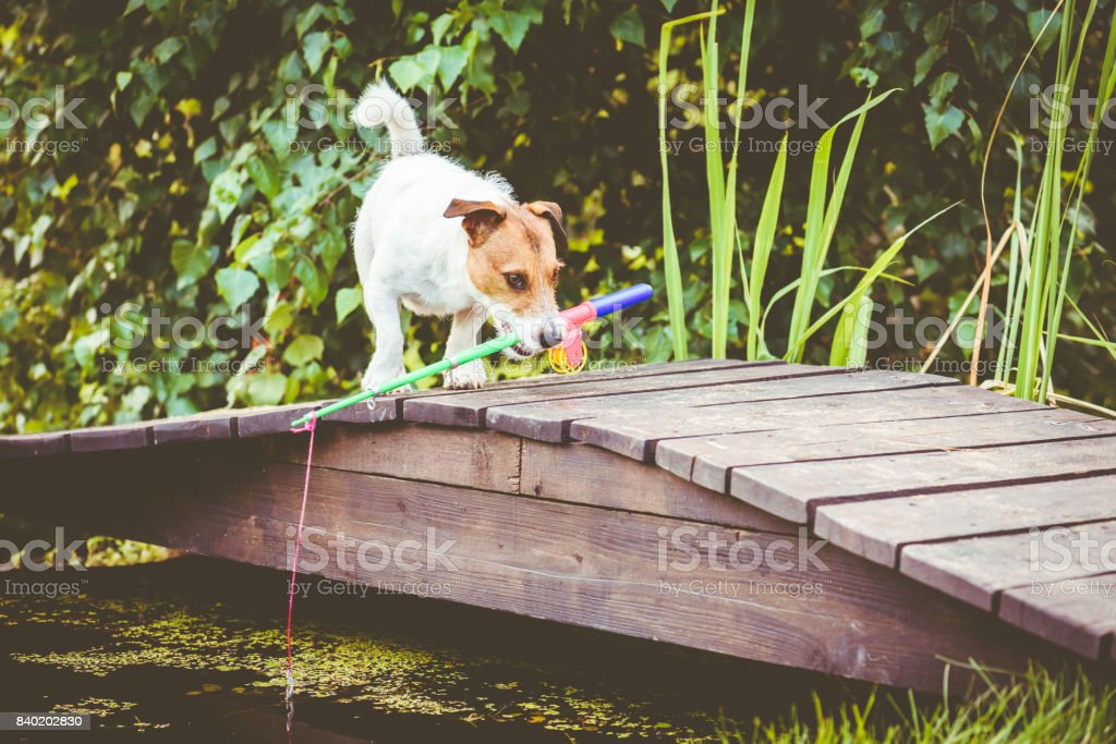 Funny fisherman on wooden bridge walking with fishing rod stock photo