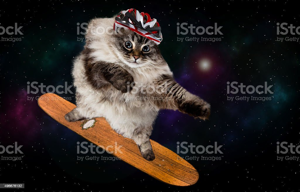 funny fluffy cat  skateboarding in space stock photo