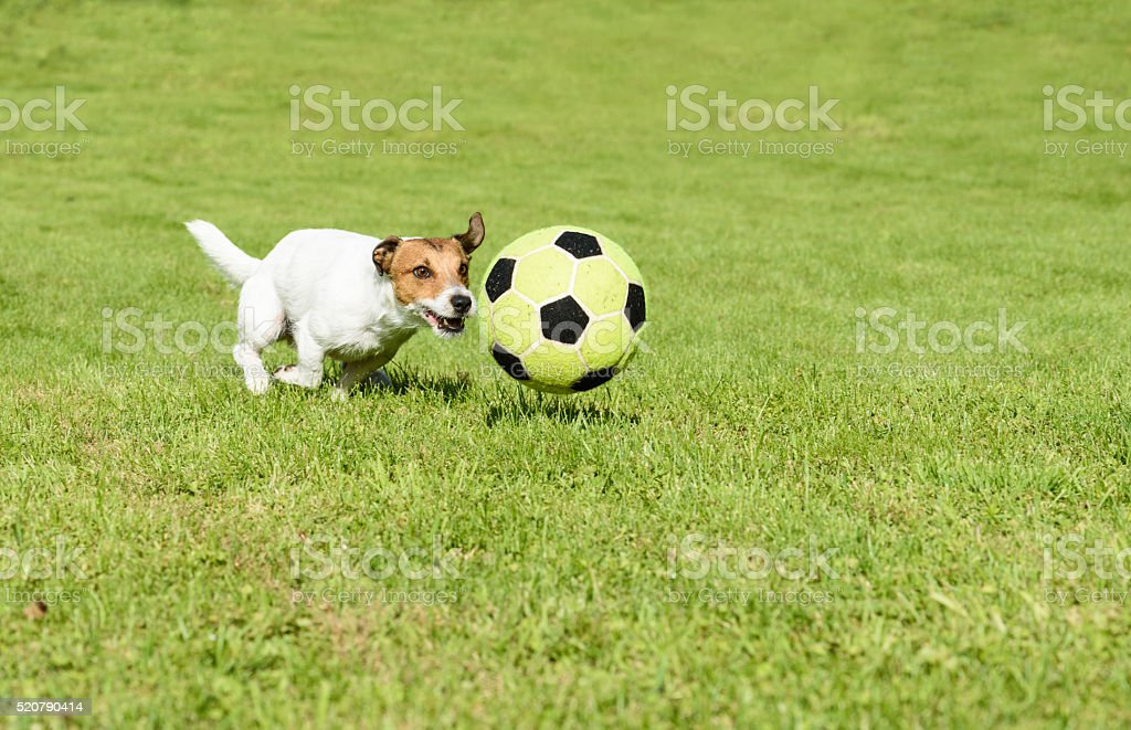 Funny football player playing with soccer ball at back yard stock photo