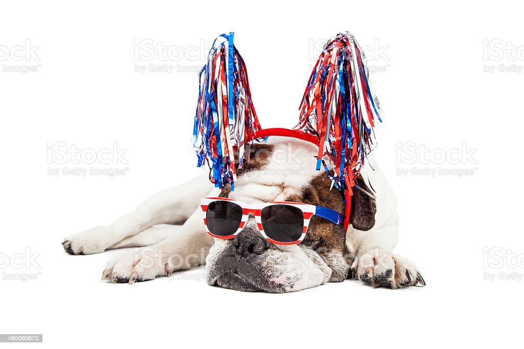 Funny Fourth of July Dog stock photo