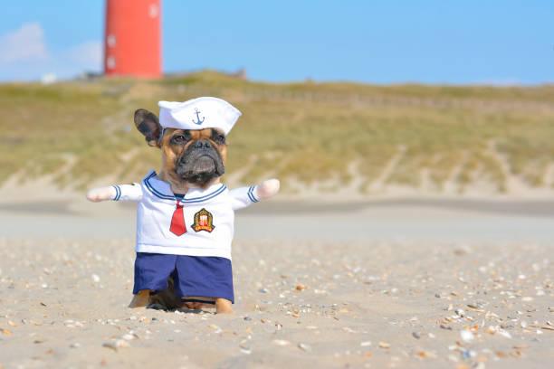 lustige französische bulldog, bekleidet mit einem niedlichen seemannshund kostüm am strand - matrosin kostüm stock-fotos und bilder