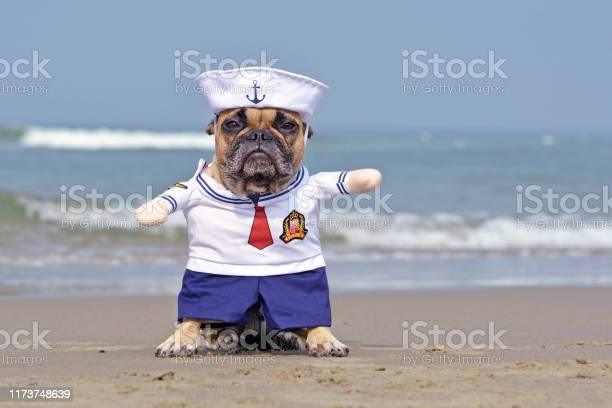 Funny french bulldog dressed up with a cute sailor dog halloween on picture id1173748639?b=1&k=6&m=1173748639&s=612x612&h=kjncgorpde kha5 extuxbcjqaj6tm70szinefrr9ps=