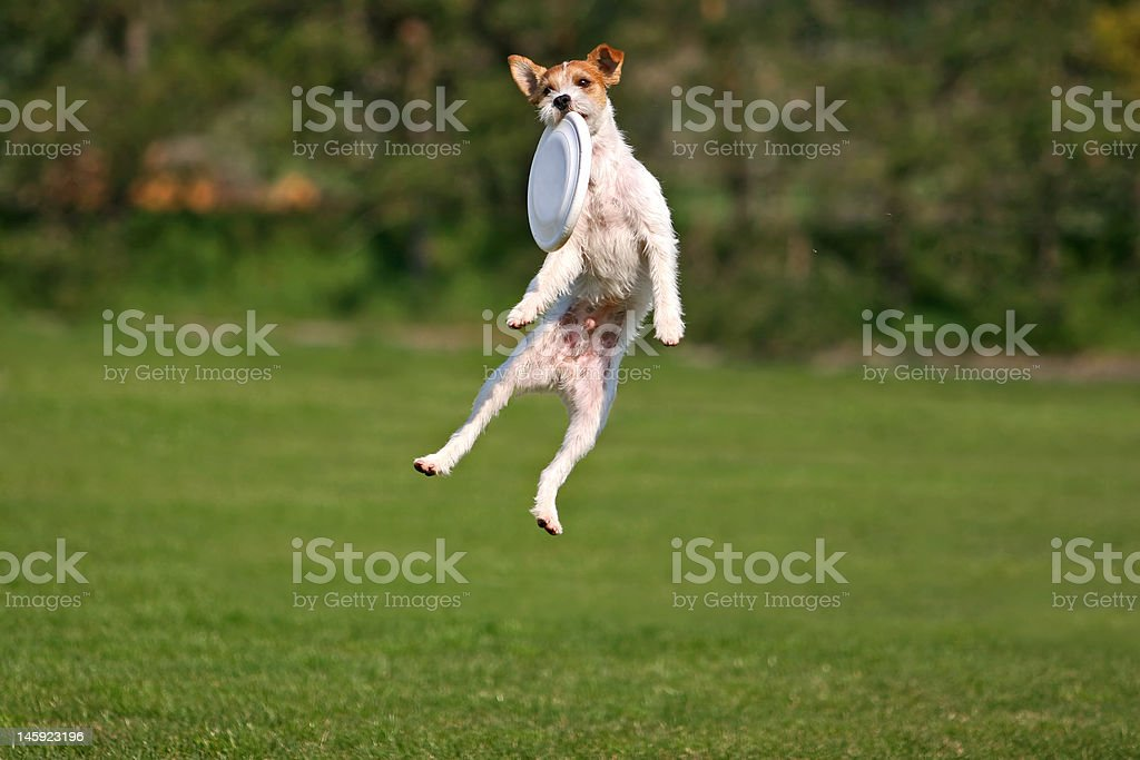 Funny frisbee catch stock photo
