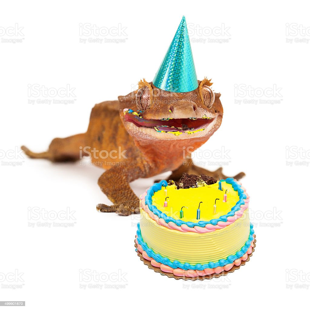 Funny Gecko Lizard Eating Birthday Cake Stock Photo More Pictures