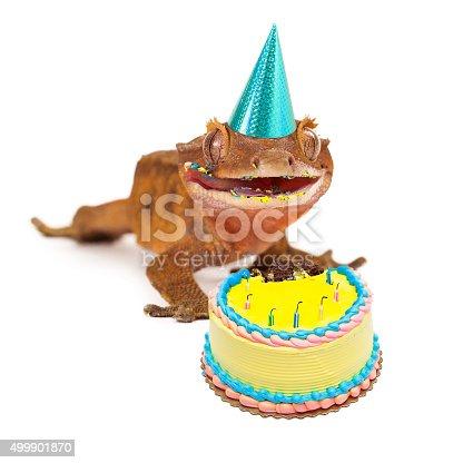 Fotografía de Funny Gecko Lagarto Comiendo Pastel De Cumpleaños y ...