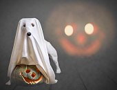 Dog wearing costume of ghost