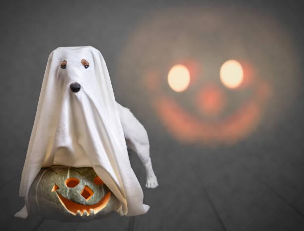 lustige geist und traditionelle halloween-kürbis mit furcht einflössenden gesicht im hintergrund - geist kostüm stock-fotos und bilder