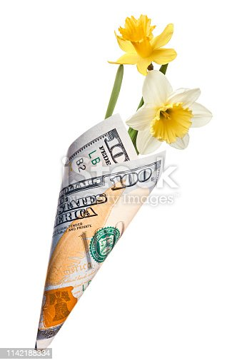 Funny gift, bouquet of white and yellow narcissus flowers wrapped in one hundred dollars