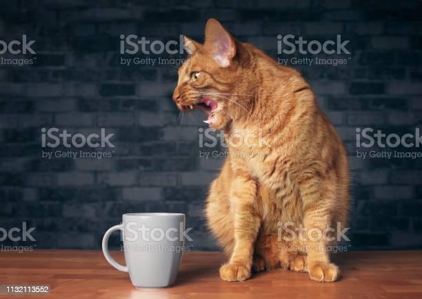 Funny ginger cat grimacing beside a coffee mug picture id1132113552?b=1&k=6&m=1132113552&s=612x612&h=d9ttslwbynglfmuv6ihnm 5xe1j7p8n eto46ki4ufu=