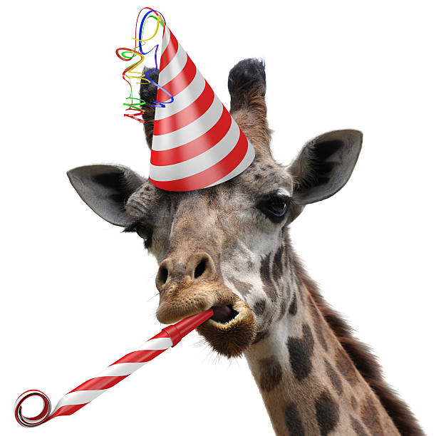 Funny giraffe party animal blowing a noisemaker stock photo