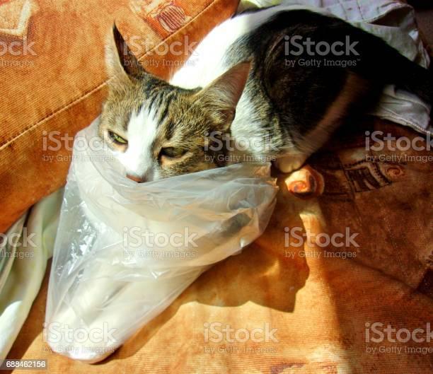 Funny grumpy cat in a plastic bag picture id688462156?b=1&k=6&m=688462156&s=612x612&h=7f3jh8jbtrayrp9ifvow0gvibutq rsw bzp zlrdb4=
