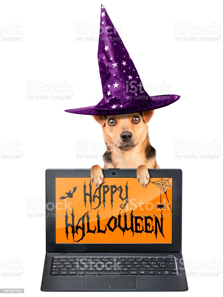 Funny Halloween Dog Witch Hat Laptop Notebook Wallpaper
