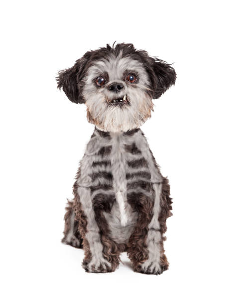 Funny halloween dog with skeleton painted fur picture id1059334188?b=1&k=6&m=1059334188&s=612x612&w=0&h=w54aqr71sajgj8lu06oji g5fdvghaynmw gxch fwc=