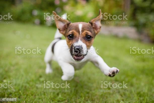 Funny happy dog picture id471515372?b=1&k=6&m=471515372&s=612x612&h=6rdqop4alietrulzgvps8ko4nnj eqmaql194x h7vi=