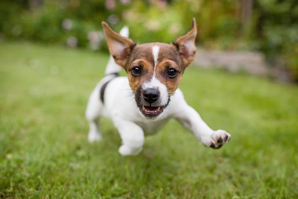 Funny happy dog picture id471515372?b=1&k=6&m=471515372&s=612x612&w=0&h=4hkdnububdzeig8nhzivmrkwjenzrmikfzm szpntwu=