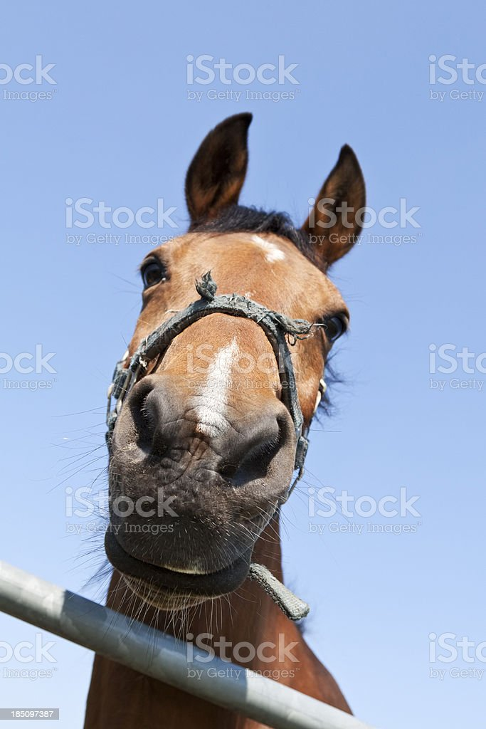 Funny Horse Head Closeup Stock Photo Download Image Now Istock