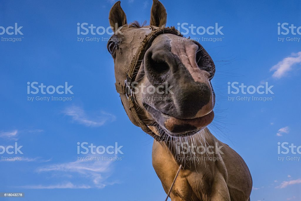 Funny Horse in front of the Sky stock photo