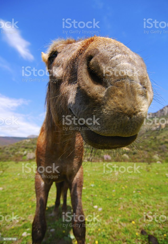 Funny Horse Stock Photo Download Image Now Istock