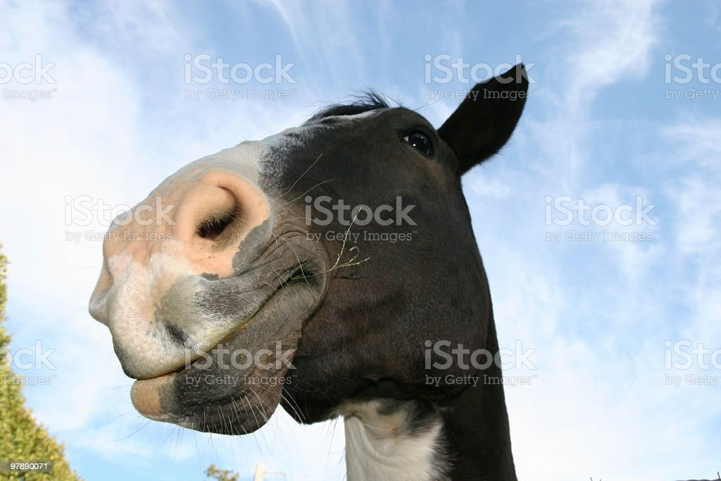 Funny Horse royalty-free stock photo