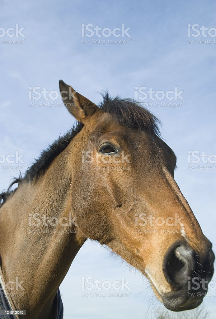 Funny Horses Face Stock Photo Download Image Now Istock