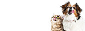 istock Funny Hungry Cat and Dog Horizontal Banner 592685490