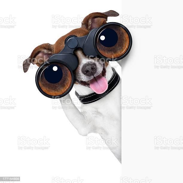 Funny image of binoculars on a dog picture id177154935?b=1&k=6&m=177154935&s=612x612&h=4ncsypqoj4ttfea6e7hy5lptv5 xupwfzzj1hhmiblc=