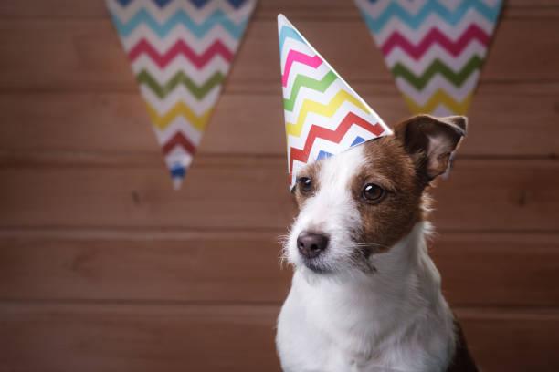 lustige jack russell hund mit sommerlichen kappe auf dem kopf - faschingssprüche stock-fotos und bilder