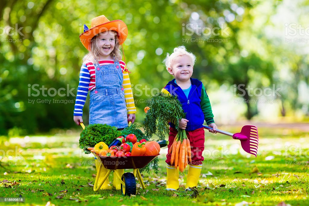 Funny kids picking vegetables on organic farm stock photo