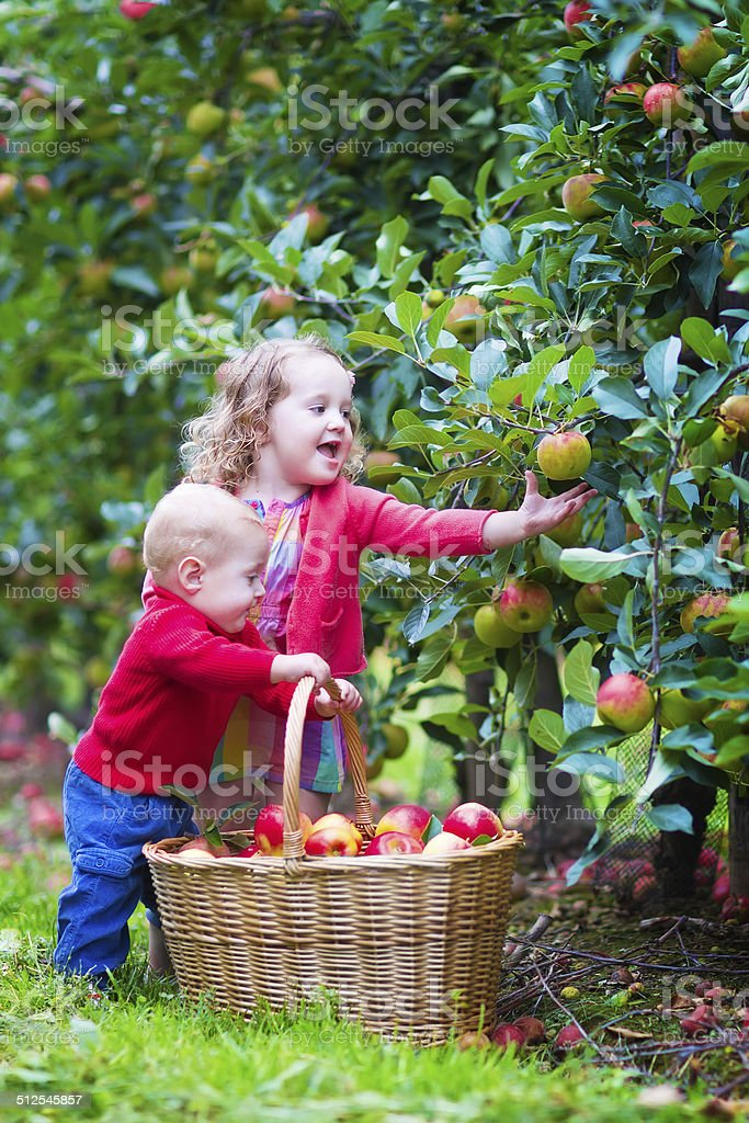 Funny Kids Playing In An Apple Garden Stock Photo & More Pictures of ...