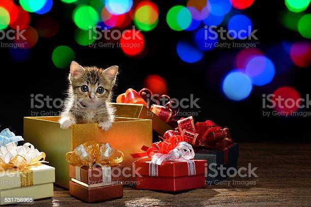 Funny kitten picture id531756965?b=1&k=6&m=531756965&s=612x612&h=r3xvqaghrfyokeqyldmvjcwqspbrziayurpv4ysi4ga=