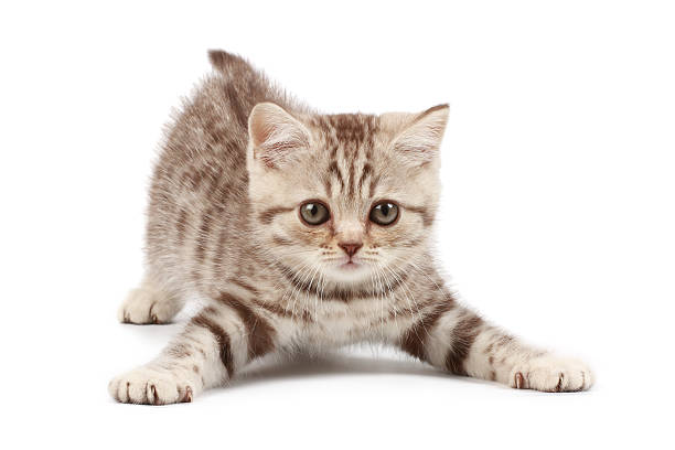 Funny kitten picture id91626487?b=1&k=6&m=91626487&s=612x612&w=0&h=u1joklcrp4nenz0abynrvqqq47sfdiqz0m0shmr0kwq=