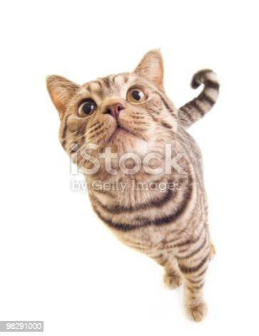 Funny Kitten Stock Photo & More Pictures of Animal