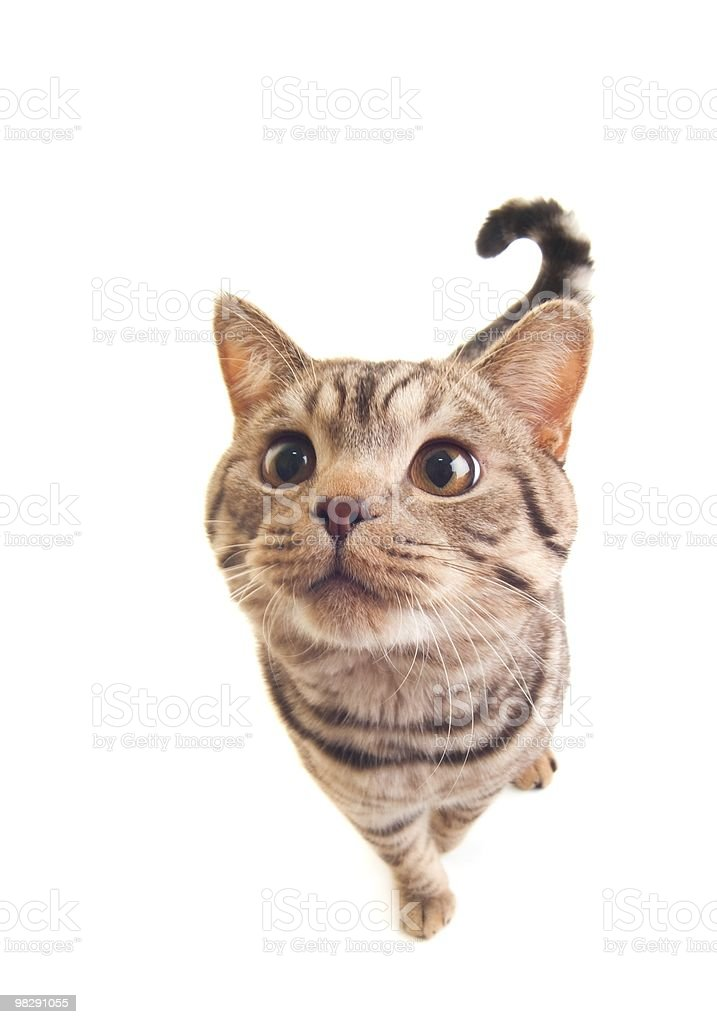 Funny kitten royalty-free stock photo