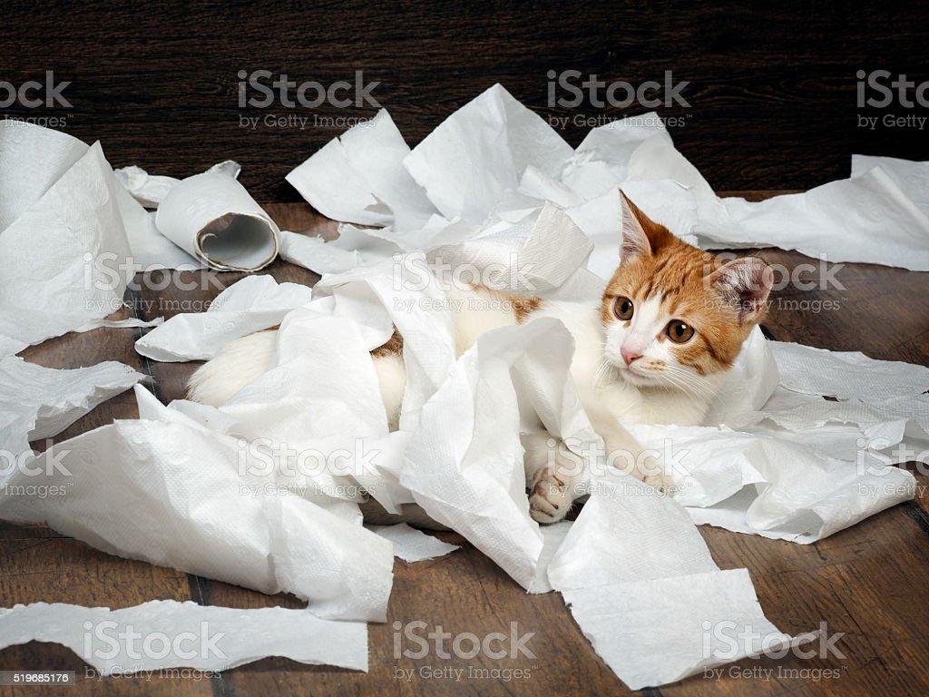 Divertente Bel Gattino Giocando Con La Carta Igienica Fotografie