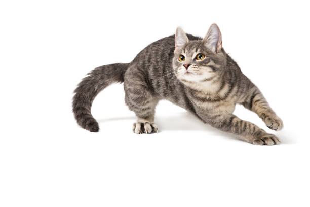 Funny Kitten Running Around on White stock photo