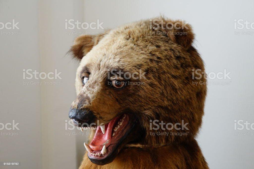 funny looking bear stock photo