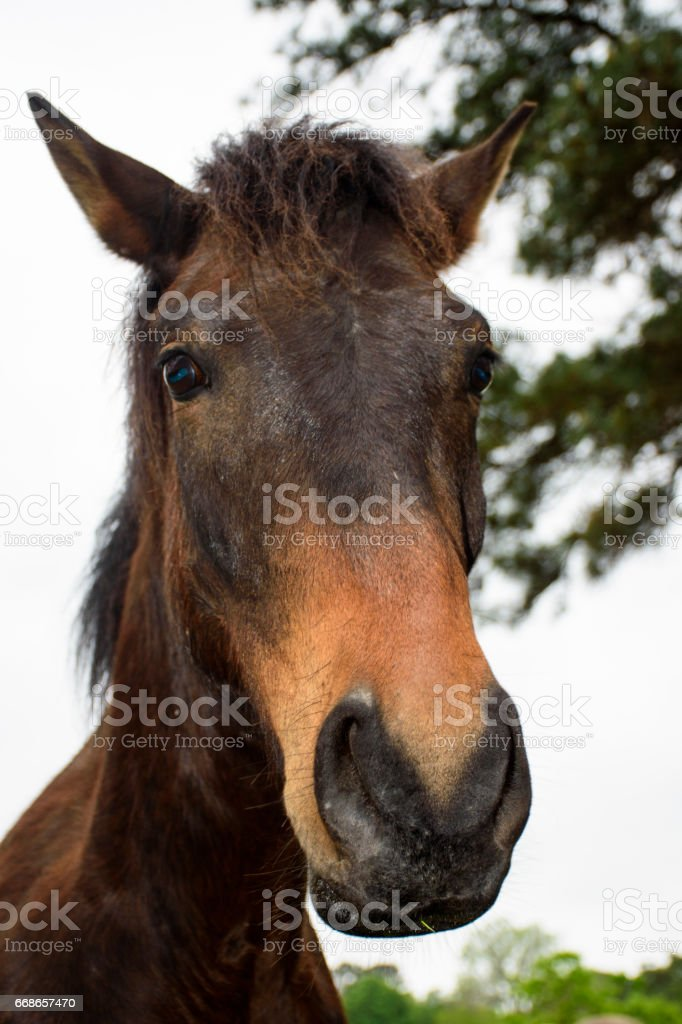 A Funny Looking Brown Horse Stock Photo Download Image Now Istock