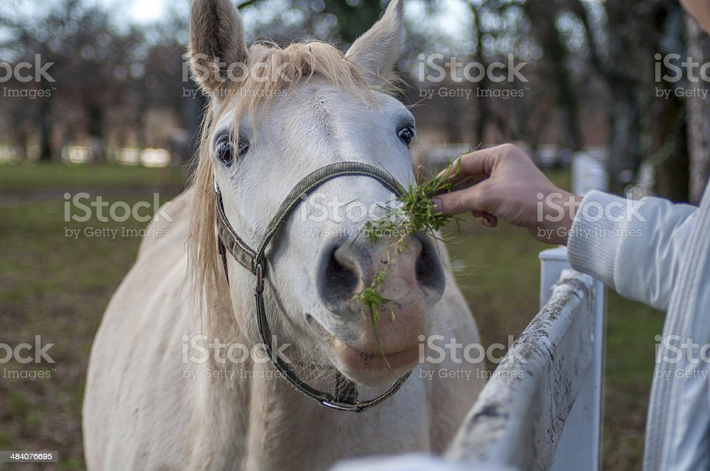 Funny Looking Horse Stock Photo Download Image Now Istock