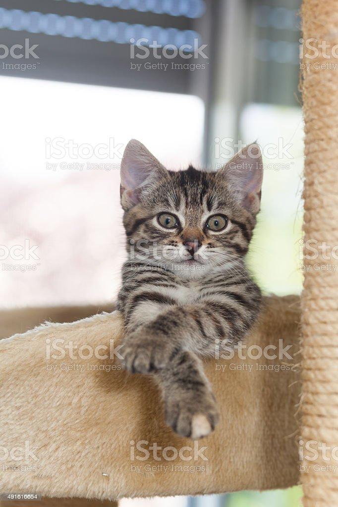 funny looking kitten stock photo