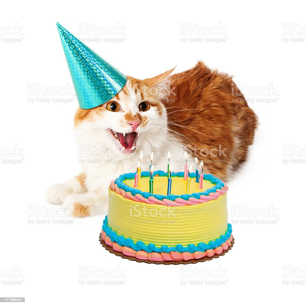 Funny Mad Birthday Cat With Cake Stock Photo More Pictures Of 2015