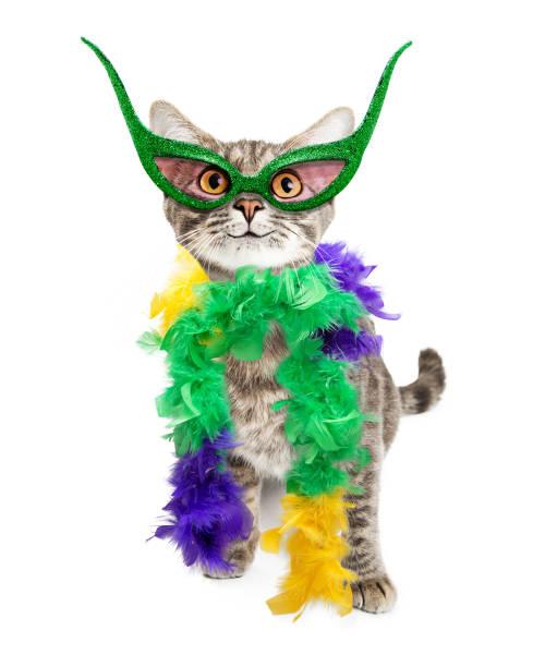 Funny mardi gras party cat picture id653966038?b=1&k=6&m=653966038&s=612x612&w=0&h=c 1oainrs3pr wob5km7aj9e2uc5v1yug6qclxaqem4=